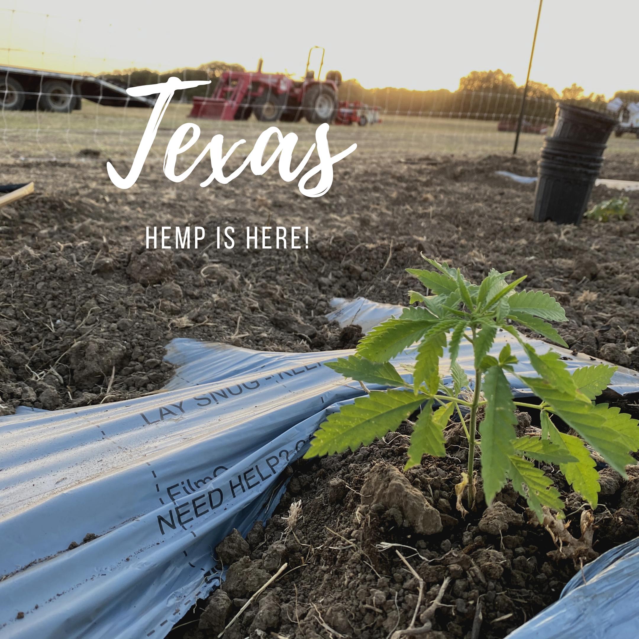 Texas Hemp Planting Party